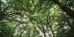 dk trees